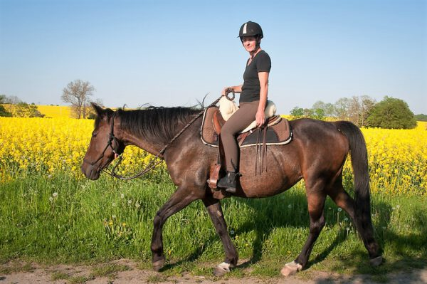 Deike: braune Stute und gelbes Rapsfeld