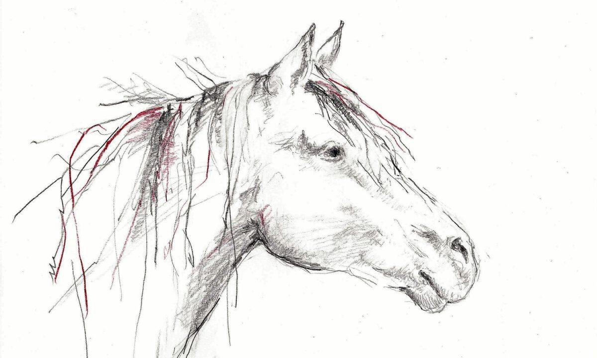 ausdrucksstarker Pferdekopf, Zeichnung von Anne Hille