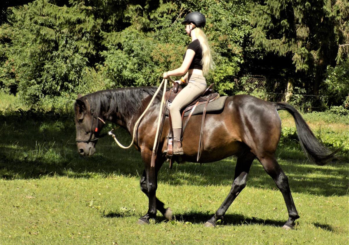 Reiten lernen mit Knotenhalfter nach Horsemanship Methode