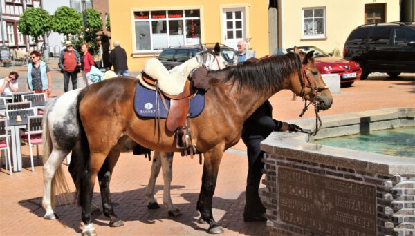 Trinkpause für die Pferde am Marktplatz Barth