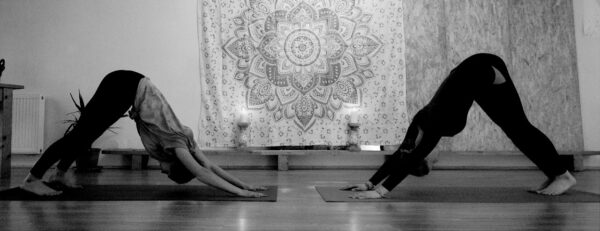 Yoga und Reiten im ART.Quartier. herabschauender Hund