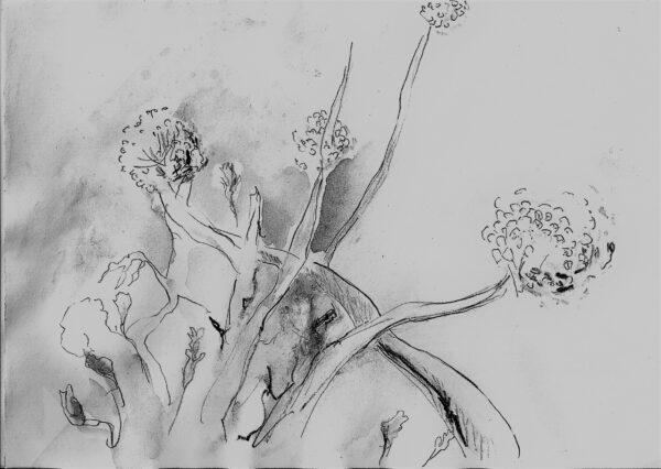 """Aquarellzeichnung """"Gartenkräuter"""" von Anne Hille"""